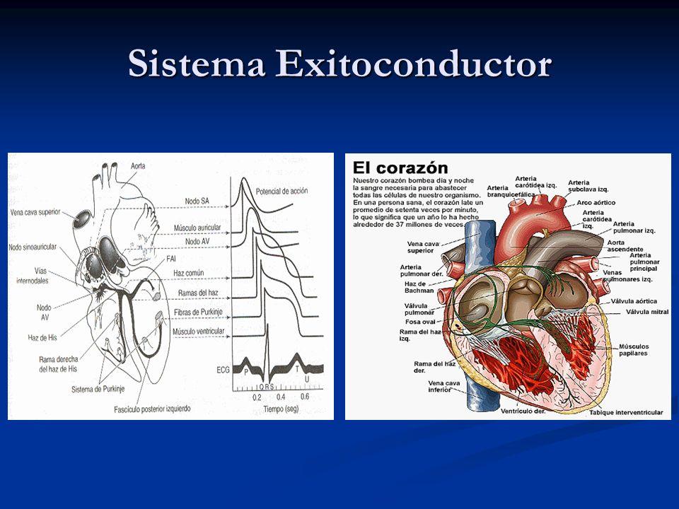 Las diversas partes del sistema de conducción y, en condiciones normales, algunas partes del miocardio son capaces de producir descargas espontáneas.