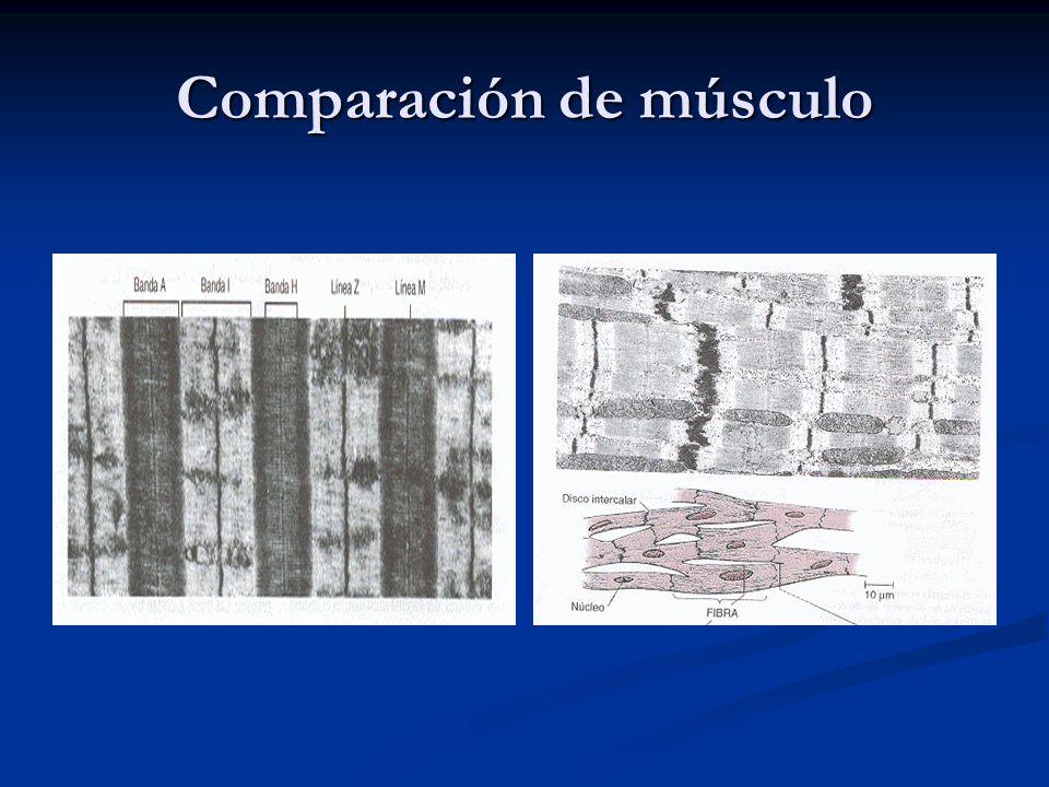 Comparación de músculo