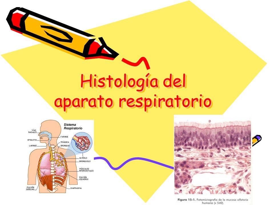 Generalidades Composición: 2 pulmones y serie de vías aéreas que comunican con el exterior.
