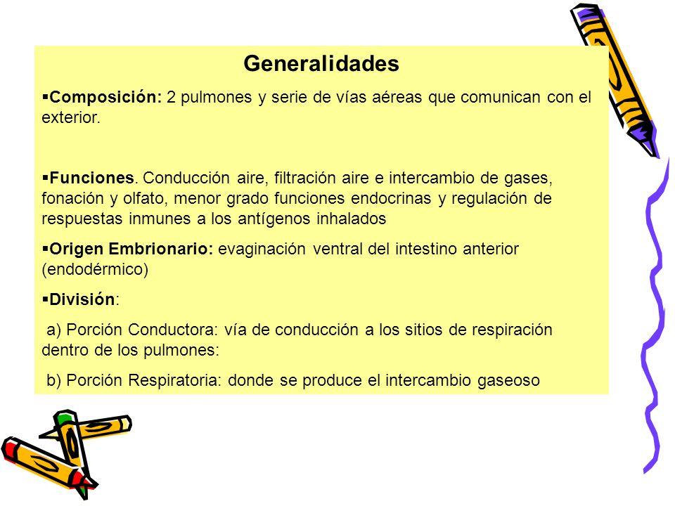 Generalidades Composición: 2 pulmones y serie de vías aéreas que comunican con el exterior. Funciones. Conducción aire, filtración aire e intercambio
