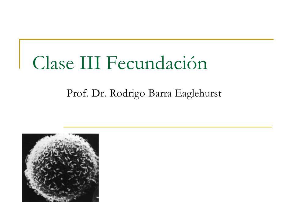 Clase III Fecundación Prof. Dr. Rodrigo Barra Eaglehurst