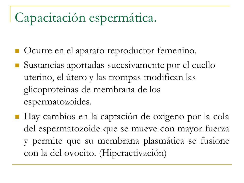 Capacitación espermática. Ocurre en el aparato reproductor femenino. Sustancias aportadas sucesivamente por el cuello uterino, el útero y las trompas