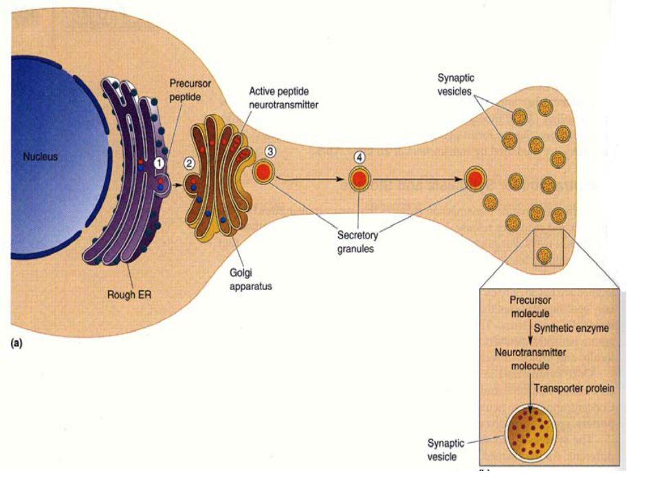 1. Monoaminas o aminas biógenas:Monoaminas CatecolaminasCatecolaminas: Dopamina,Dopamina noradrenalina ynoradrenalina adrenalina.adrenalina 2. Indolam