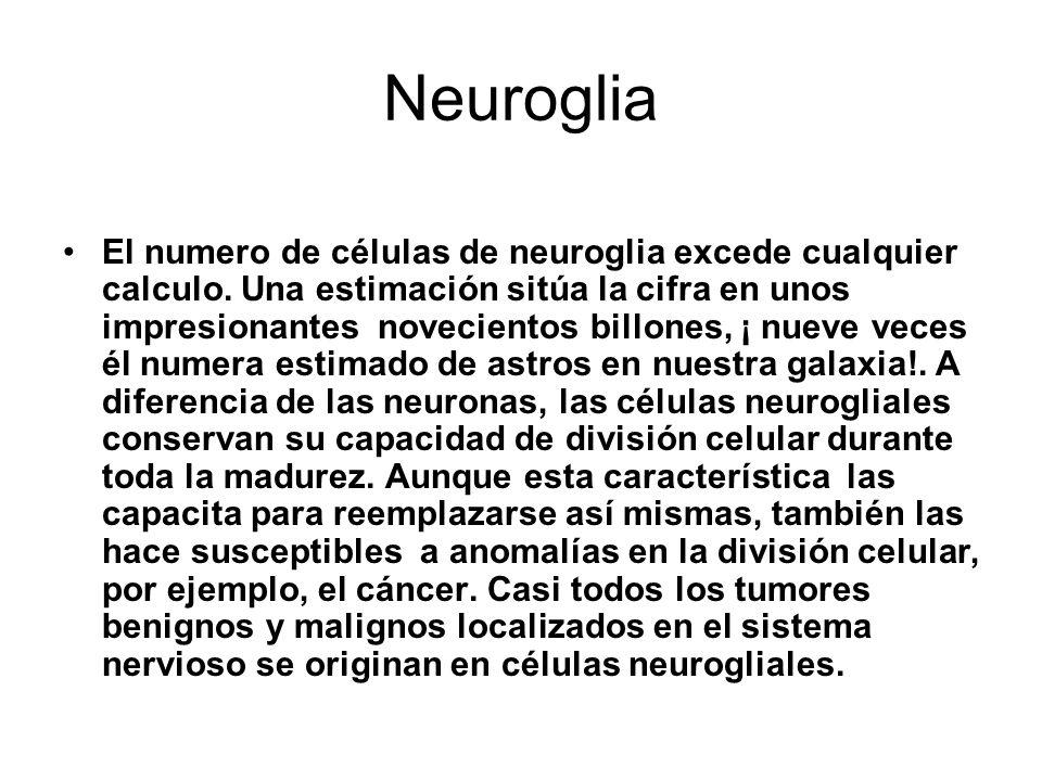 Neuroglia El numero de células de neuroglia excede cualquier calculo.