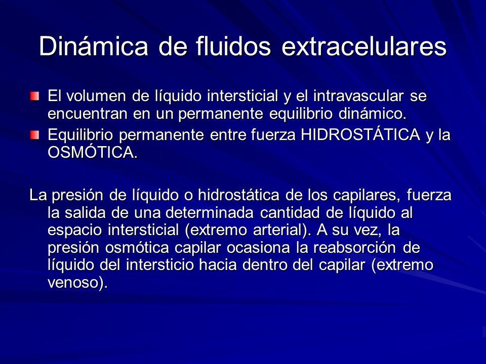 Dinámica de fluidos extracelulares El volumen de líquido intersticial y el intravascular se encuentran en un permanente equilibrio dinámico. Equilibri