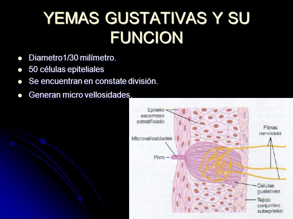 TRANSMISION DE LAS SEÑALES GUSTATIVAS EN EL S.N.C
