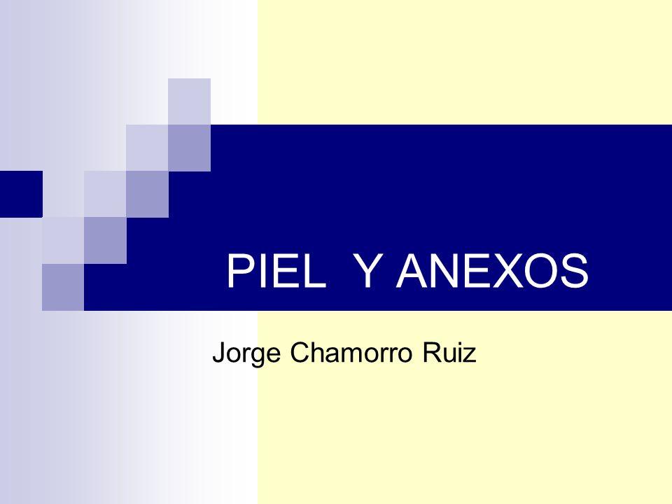 PIEL Y ANEXOS Jorge Chamorro Ruiz