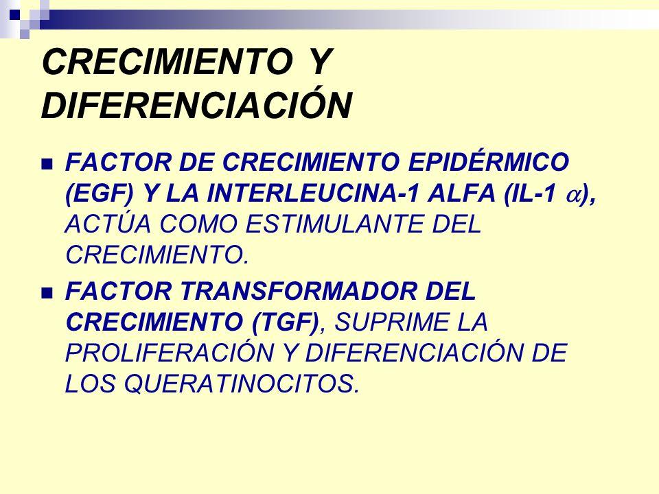 CRECIMIENTO Y DIFERENCIACIÓN FACTOR DE CRECIMIENTO EPIDÉRMICO (EGF) Y LA INTERLEUCINA-1 ALFA (IL-1 ), ACTÚA COMO ESTIMULANTE DEL CRECIMIENTO. FACTOR T