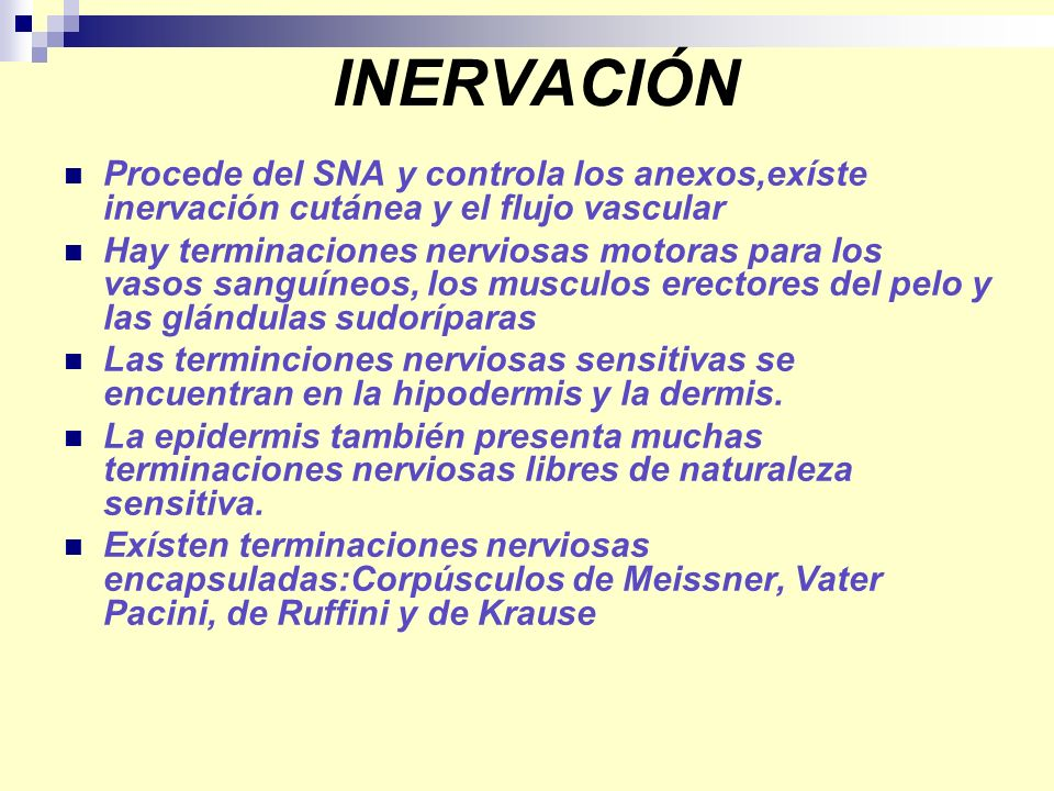 INERVACIÓN Procede del SNA y controla los anexos,exíste inervación cutánea y el flujo vascular Hay terminaciones nerviosas motoras para los vasos sang
