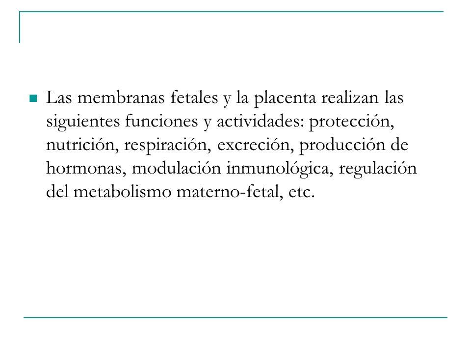 Las membranas fetales y la placenta realizan las siguientes funciones y actividades: protección, nutrición, respiración, excreción, producción de horm
