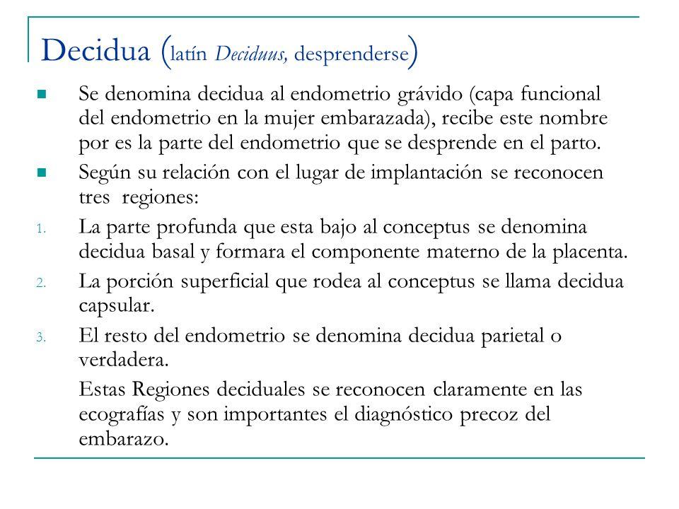 Decidua ( latín Deciduus, desprenderse ) Se denomina decidua al endometrio grávido (capa funcional del endometrio en la mujer embarazada), recibe este