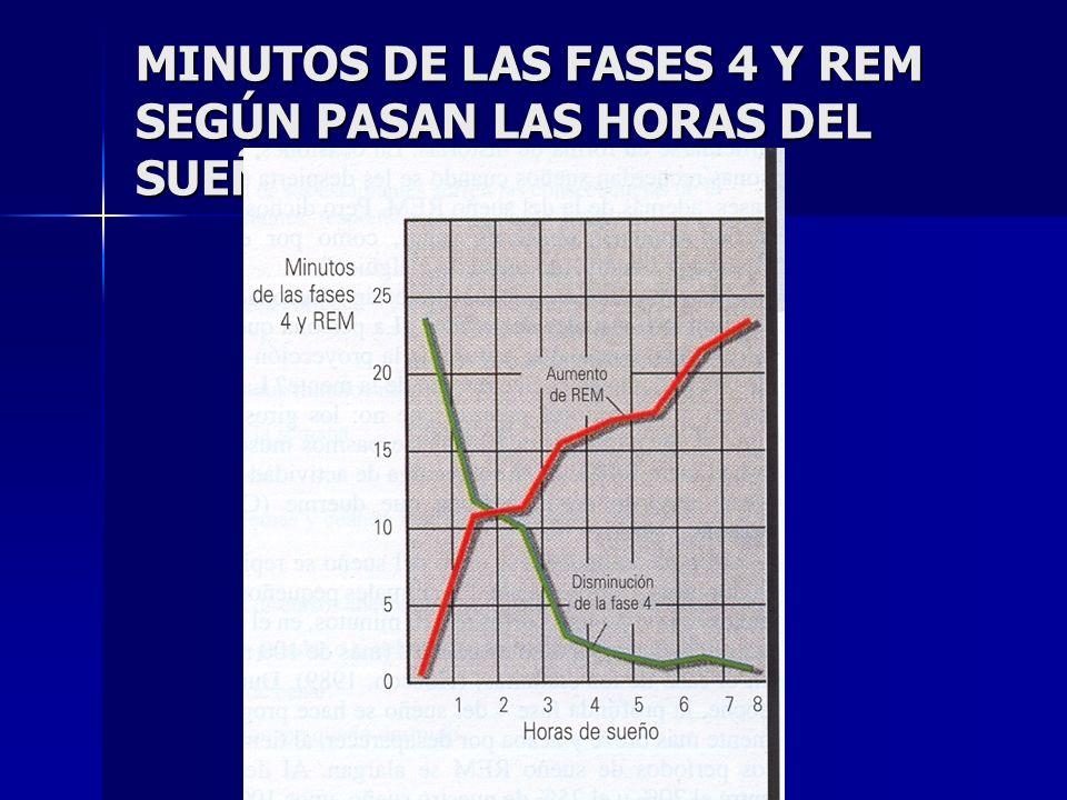 MINUTOS DE LAS FASES 4 Y REM SEGÚN PASAN LAS HORAS DEL SUEÑO