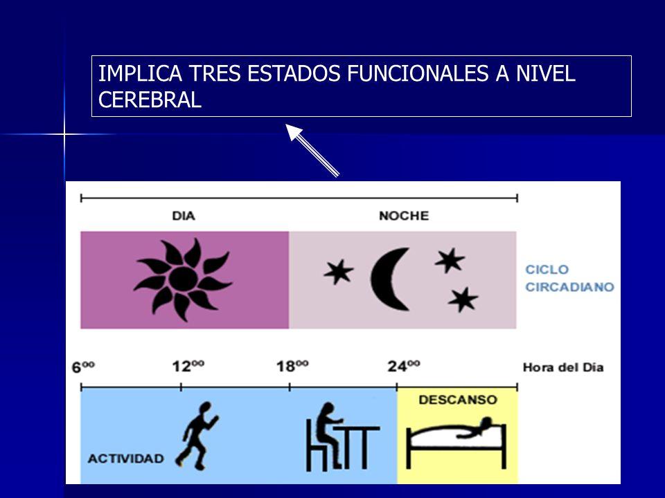 TEORÍA PASIVA DEL SUEÑO (Bremmer 1935)las áreas excitadoras del tronco encefálico, el sistema reticular activador, se fatigaban a lo largo del día de vigilia y por tanto se inactivaban TEORÍA PASIVA DEL SUEÑO (Bremmer 1935)las áreas excitadoras del tronco encefálico, el sistema reticular activador, se fatigaban a lo largo del día de vigilia y por tanto se inactivaban –Moruzzi (1949)descubrió que la sección de tronco encefálico por la región protuberancial media crea un cerebro cuya corteza nunca duerme (centro del sueño que inhibe otras areas cerebrales) TEORIA DE LA RESTAURACION SNC (Liberacion de hormonas, desarrolllo y maduración SNC) nadie descubrió proceso fisiológico concreto de esrtautacion TEORIA DE LA RESTAURACION SNC (Liberacion de hormonas, desarrolllo y maduración SNC) nadie descubrió proceso fisiológico concreto de esrtautacion TEORIA DE LA ADAPTACION.No meterse en problemas TEORIA DE LA ADAPTACION.No meterse en problemas