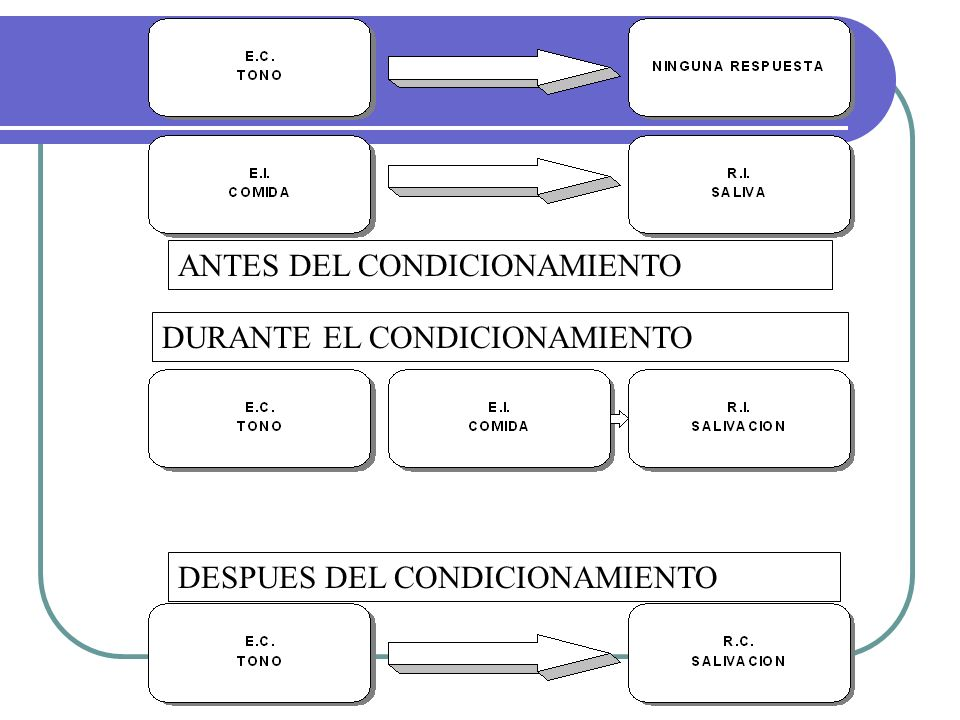 ANTES DEL CONDICIONAMIENTO DURANTE EL CONDICIONAMIENTO DESPUES DEL CONDICIONAMIENTO