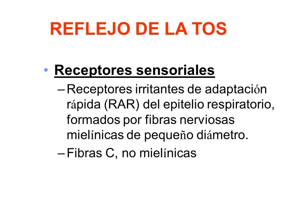 Receptores sensoriales –Receptores irritantes de adaptaci ó n r á pida (RAR) del epitelio respiratorio, formados por fibras nerviosas miel í nicas de