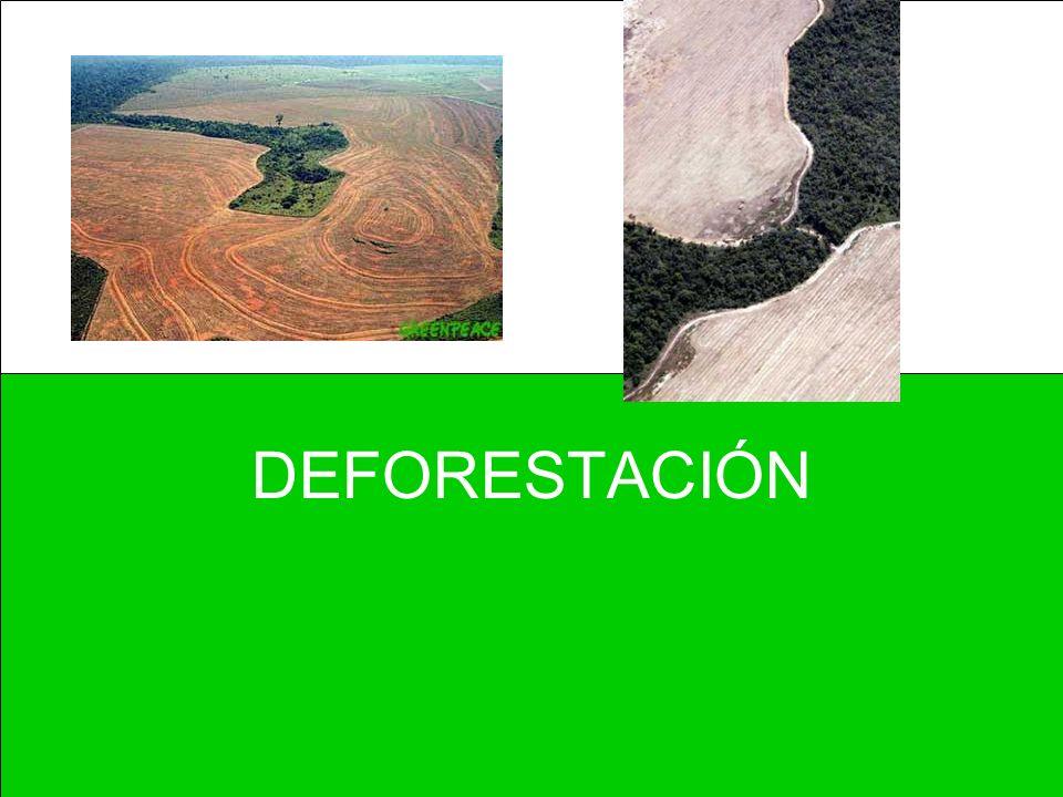 MARCO LEGAL Base Constitucional –Art.4. Derecho a un medio ambiente adecuado.