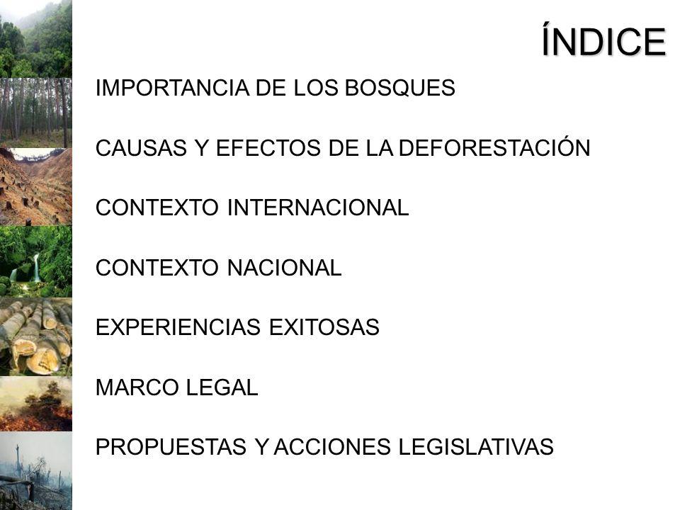 ÍNDICE IMPORTANCIA DE LOS BOSQUES CAUSAS Y EFECTOS DE LA DEFORESTACIÓN CONTEXTO INTERNACIONAL CONTEXTO NACIONAL EXPERIENCIAS EXITOSAS MARCO LEGAL PROP