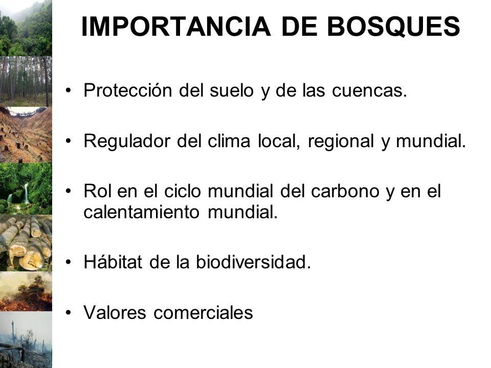 IMPORTANCIA DE BOSQUES Protección del suelo y de las cuencas. Regulador del clima local, regional y mundial. Rol en el ciclo mundial del carbono y en
