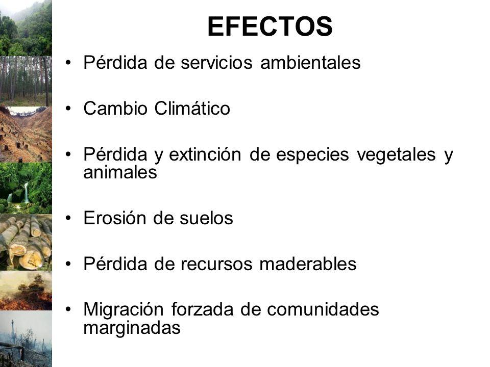 EFECTOS Pérdida de servicios ambientales Cambio Climático Pérdida y extinción de especies vegetales y animales Erosión de suelos Pérdida de recursos m