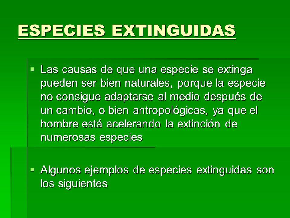 ESPECIES EXTINGUIDAS Las causas de que una especie se extinga pueden ser bien naturales, porque la especie no consigue adaptarse al medio después de u