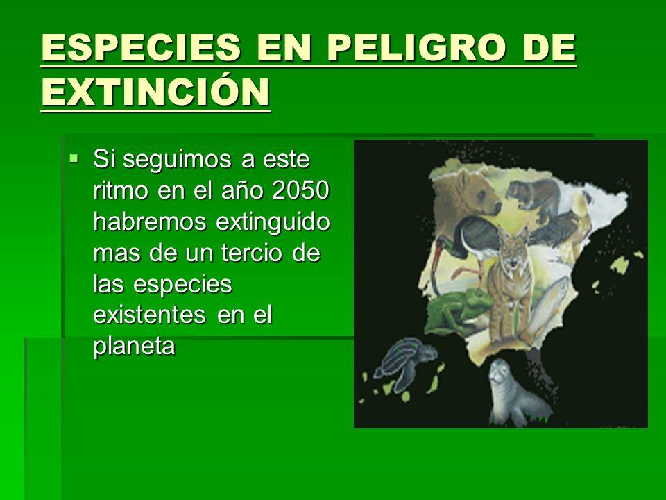 ESPECIES EN PELIGRO DE EXTINCIÓN Si seguimos a este ritmo en el año 2050 habremos extinguido mas de un tercio de las especies existentes en el planeta