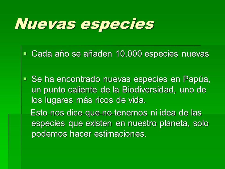 Nuevas especies Cada año se añaden 10.000 especies nuevas Cada año se añaden 10.000 especies nuevas Se ha encontrado nuevas especies en Papúa, un punt