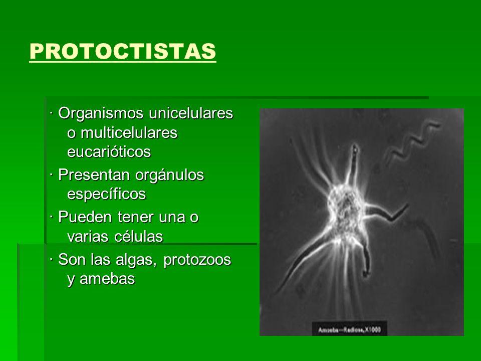 PROTOCTISTAS · Organismos unicelulares o multicelulares eucarióticos · Presentan orgánulos específicos · Pueden tener una o varias células · Son las a