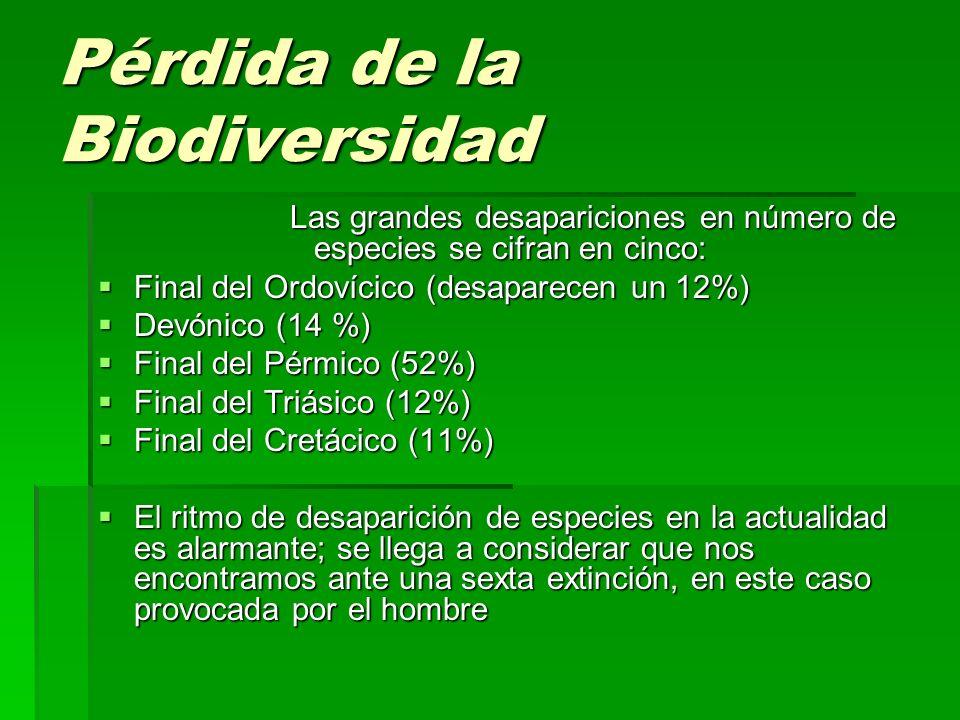 Pérdida de la Biodiversidad Las grandes desapariciones en número de especies se cifran en cinco: Final del Ordovícico (desaparecen un 12%) Final del O