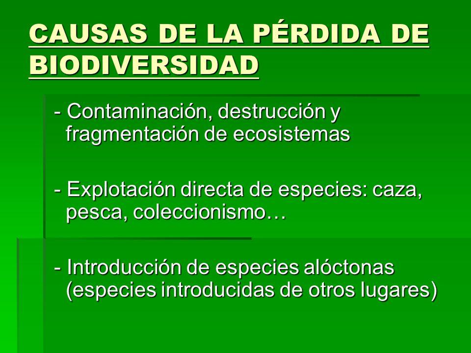 CAUSAS DE LA PÉRDIDA DE BIODIVERSIDAD - Contaminación, destrucción y fragmentación de ecosistemas - Contaminación, destrucción y fragmentación de ecos