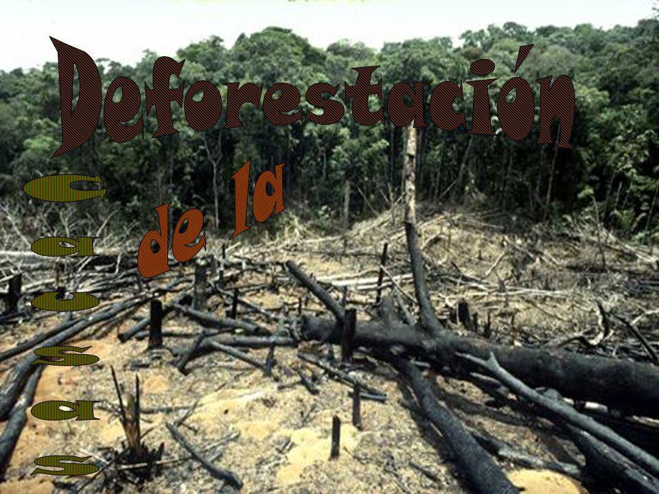 Entre las causas directas más importantes de la deforestación figuran la tala, la conversión del bosque a la agricultura y a la cría de ganado, la urbanización y la construcción de infraestructura, la minería y la explotación de petróleo, la lluvia ácida y los incendios.