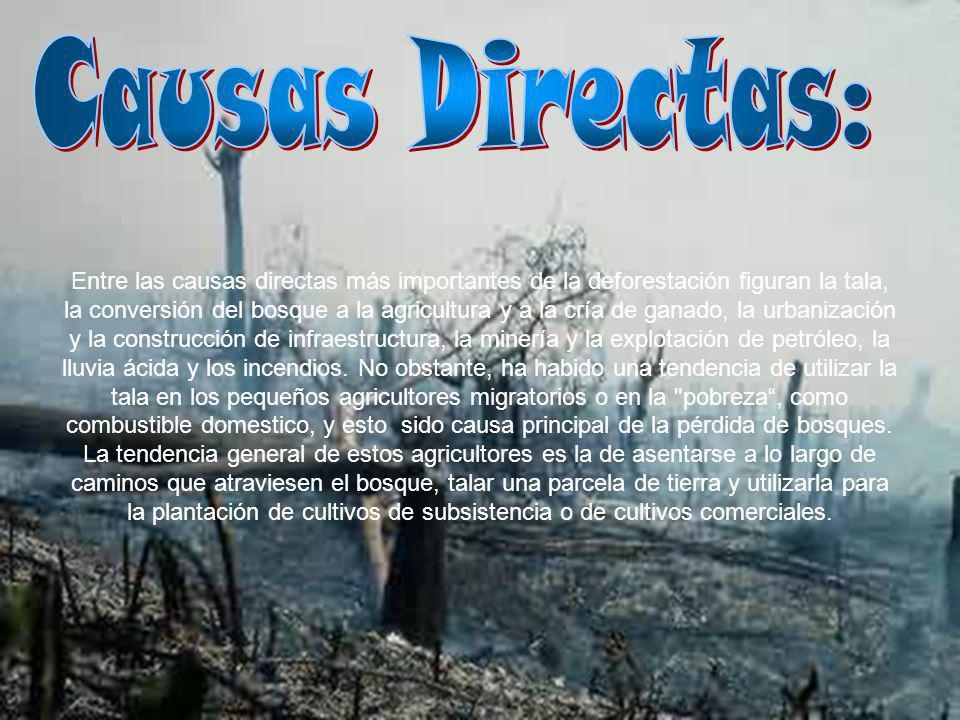 Entre las causas directas más importantes de la deforestación figuran la tala, la conversión del bosque a la agricultura y a la cría de ganado, la urb