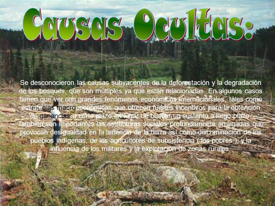 Durante la década de los 70, los bosques de Venezuela fueron talados a razón de 245.000 hectáreas por año (FAO, 1988)..