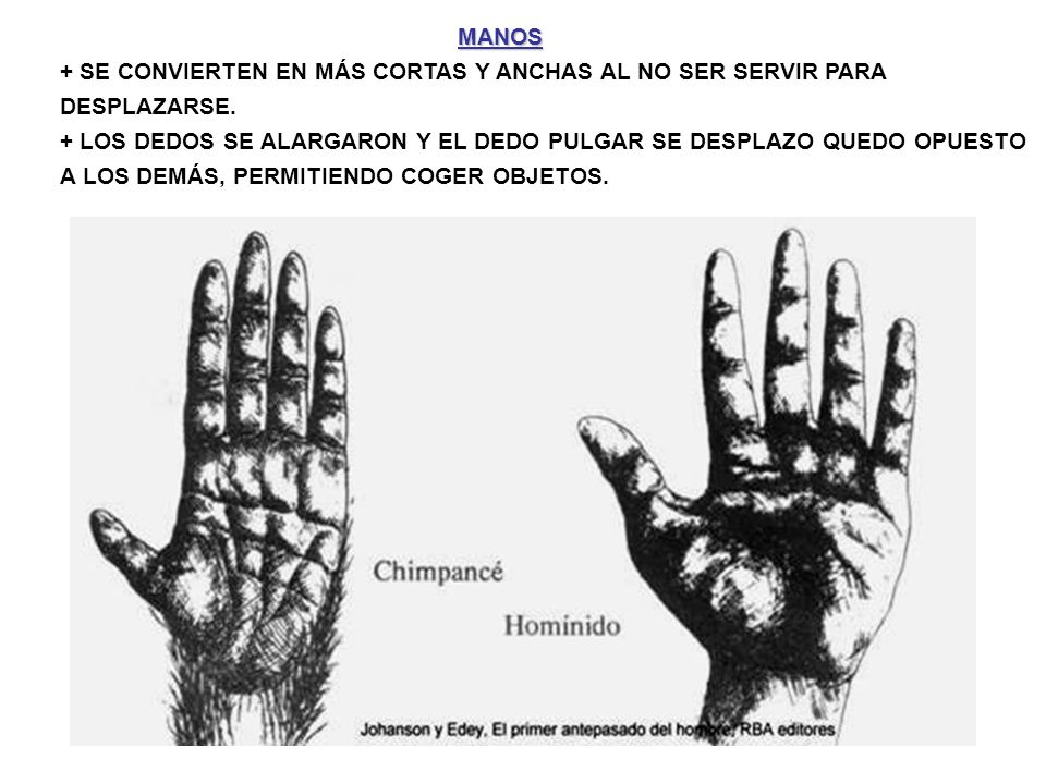 http://personalabp.blogspot.com/ http://neanderthalis.blogspot.com/2007_10_01_archive.html http://platea.pntic.mec.es/~jpascual/Homo/hominidos.htm http://www.atapuerca.tv/cuaderno/index.php?cuaderno=17 http://www.march.es/conferencias/anteriores/voz.asp?id=21 http://cmcirubide.blogspot.com/2008/11/los-homdos-por-militsa-stoyanova-1b.html http://www.iesabastos.org/archivos/daniel_tomas/4eso/evolucion- humana/Primeros_primates.htm http://www.doyma.es/bronco/ctl_servlet?_f=40&ident=13119942