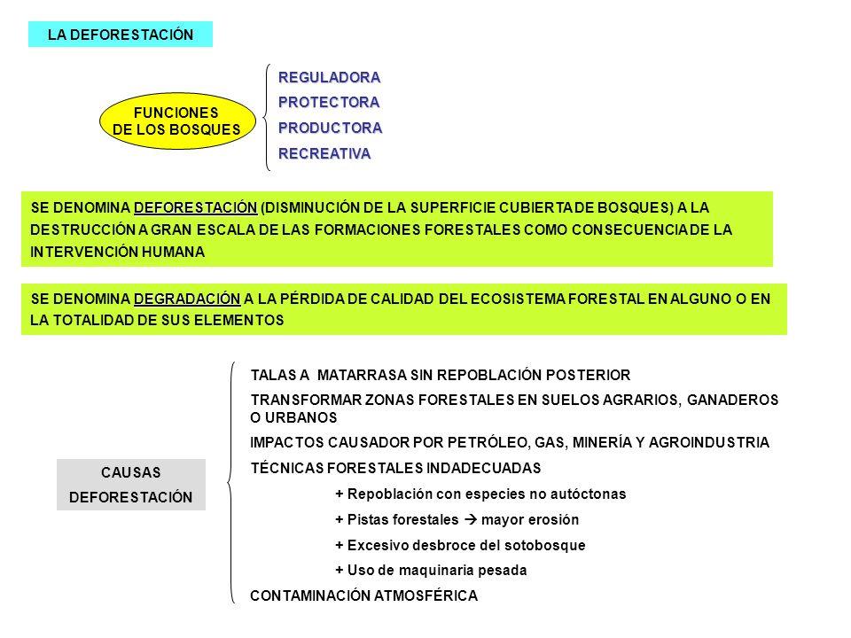 LA DEFORESTACIÓN FUNCIONES DE LOS BOSQUES REGULADORAPROTECTORAPRODUCTORARECREATIVA DEFORESTACIÓN SE DENOMINA DEFORESTACIÓN (DISMINUCIÓN DE LA SUPERFIC