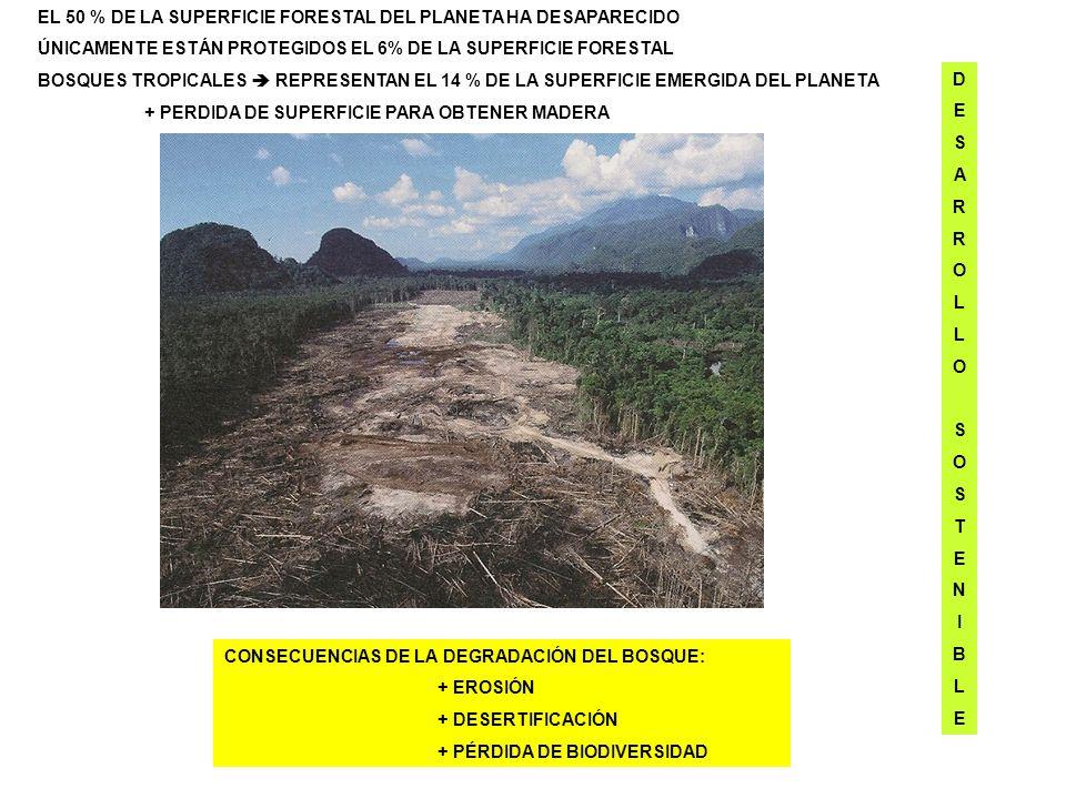 EL 50 % DE LA SUPERFICIE FORESTAL DEL PLANETA HA DESAPARECIDO ÚNICAMENTE ESTÁN PROTEGIDOS EL 6% DE LA SUPERFICIE FORESTAL BOSQUES TROPICALES REPRESENT