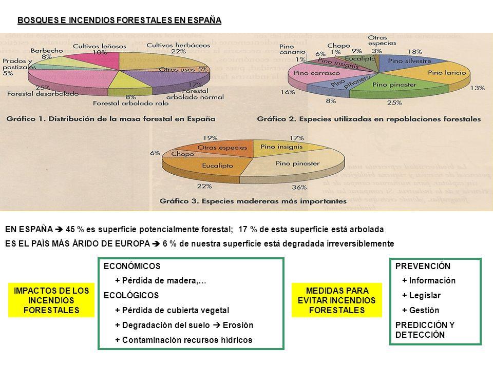 BOSQUES E INCENDIOS FORESTALES EN ESPAÑA EN ESPAÑA 45 % es superficie potencialmente forestal; 17 % de esta superficie está arbolada ES EL PAÍS MÁS ÁR