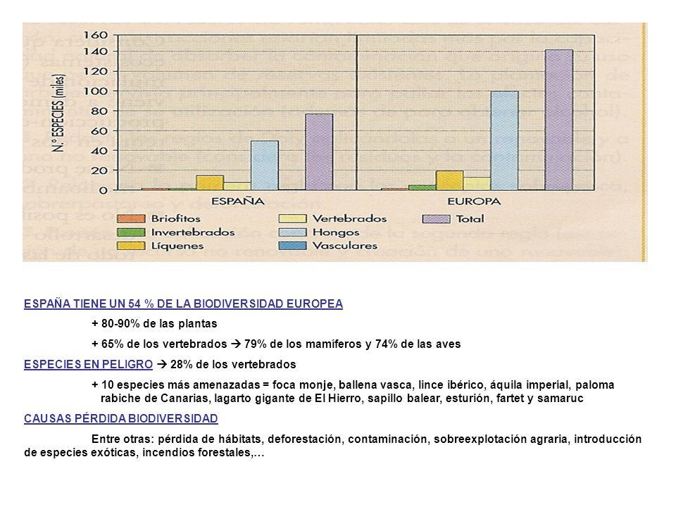 ESPAÑA TIENE UN 54 % DE LA BIODIVERSIDAD EUROPEA + 80-90% de las plantas + 65% de los vertebrados 79% de los mamíferos y 74% de las aves ESPECIES EN P