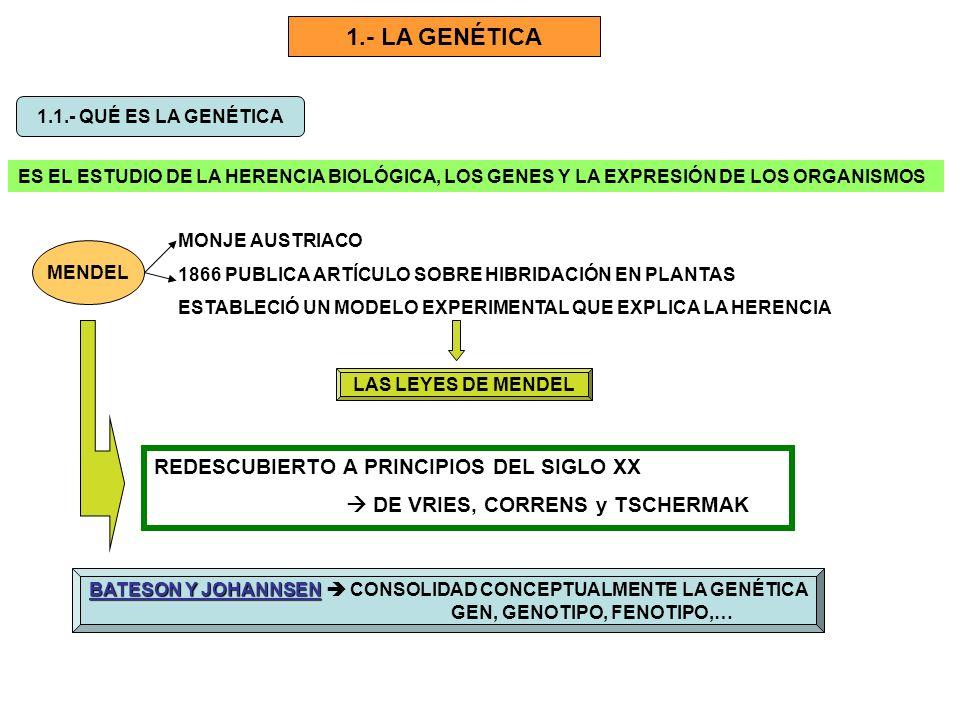1.- LA GENÉTICA 1.1.- QUÉ ES LA GENÉTICA ES EL ESTUDIO DE LA HERENCIA BIOLÓGICA, LOS GENES Y LA EXPRESIÓN DE LOS ORGANISMOS MENDEL MONJE AUSTRIACO 186