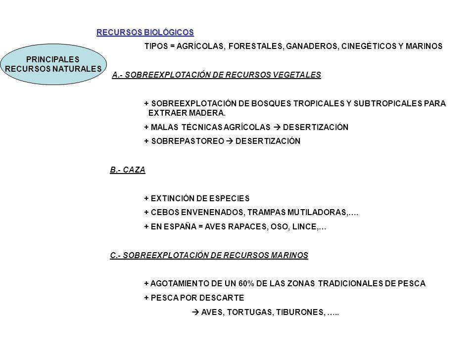 PRINCIPALES RECURSOS NATURALES RECURSOS BIOLÓGICOS TIPOS = AGRÍCOLAS, FORESTALES, GANADEROS, CINEGÉTICOS Y MARINOS A.- SOBREEXPLOTACIÓN DE RECURSOS VE