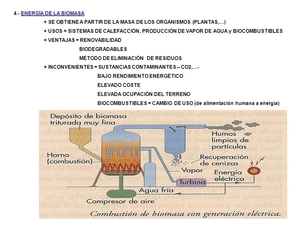 ENERGÍA DE LA BIOMASA 4.- ENERGÍA DE LA BIOMASA + SE OBTIENE A PARTIR DE LA MASA DE LOS ORGANISMOS (PLANTAS,…) + USOS = SISTEMAS DE CALEFACCIÓN, PRODU