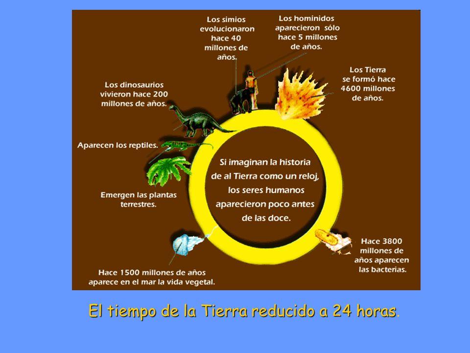 El tiempo de la Tierra reducido a 24 horas El tiempo de la Tierra reducido a 24 horas.