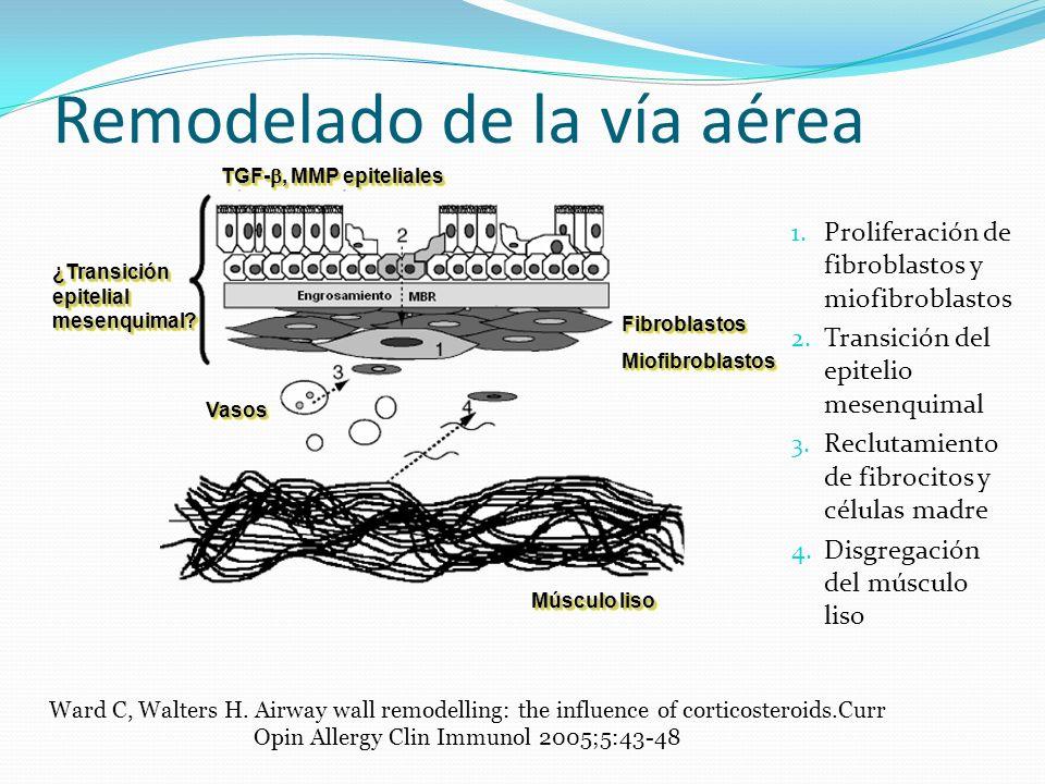 Remodelado de la vía aérea 1. Proliferación de fibroblastos y miofibroblastos 2. Transición del epitelio mesenquimal 3. Reclutamiento de fibrocitos y