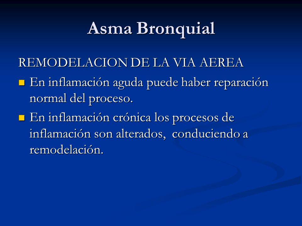 Asma Bronquial REMODELACION DE LA VIA AEREA En inflamación aguda puede haber reparación normal del proceso. En inflamación aguda puede haber reparació