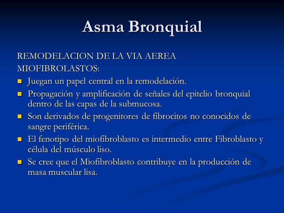 Asma Bronquial REMODELACION DE LA VIA AEREA MIOFIBROLASTOS: Juegan un papel central en la remodelación. Juegan un papel central en la remodelación. Pr