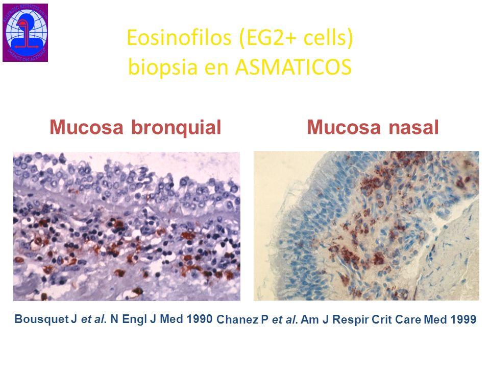 Eosinofilos (EG2+ cells) biopsia en ASMATICOS Bousquet J et al. N Engl J Med 1990 Mucosa bronquial Chanez P et al. Am J Respir Crit Care Med 1999 Muco