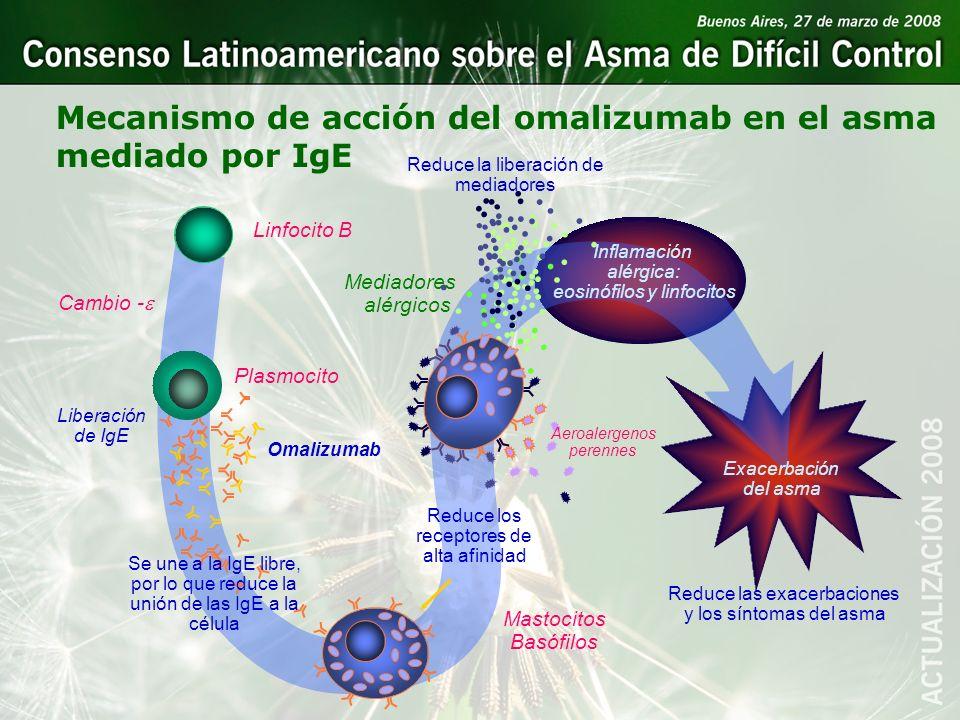 Mecanismo de acción del omalizumab en el asma mediado por IgE Aeroalergenos perennes Omalizumab Se une a la IgE libre, por lo que reduce la unión de l