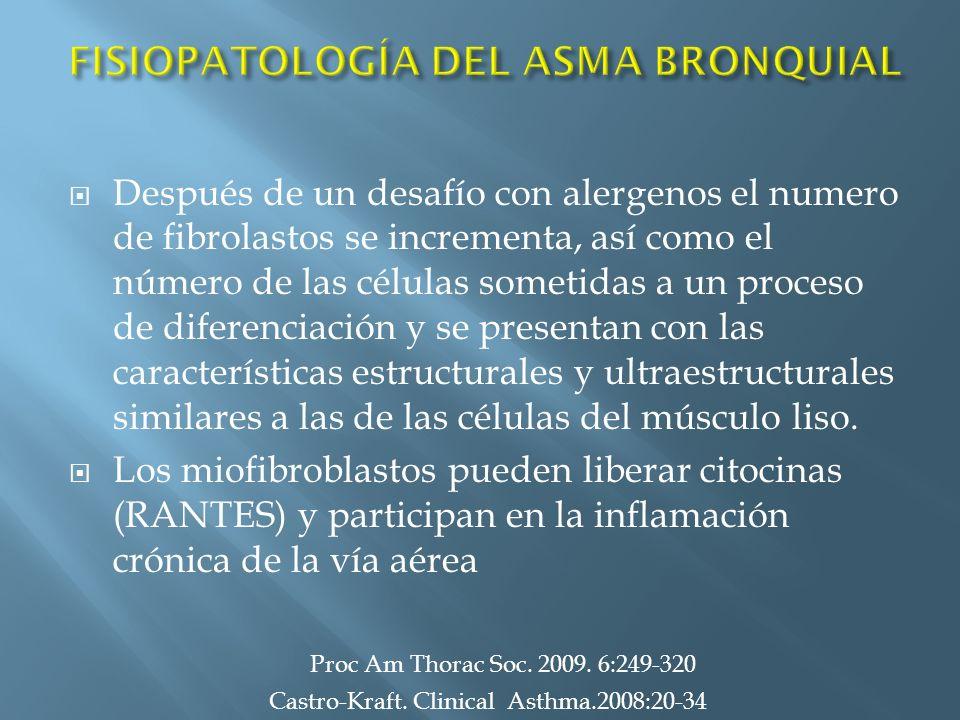 Después de un desafío con alergenos el numero de fibrolastos se incrementa, así como el número de las células sometidas a un proceso de diferenciación