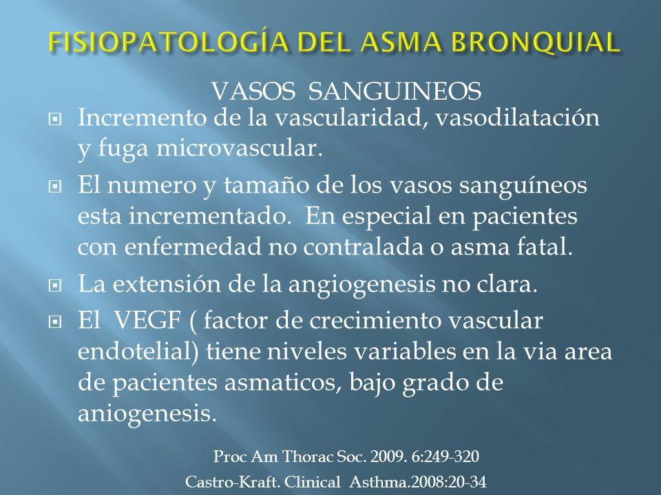 Incremento de la vascularidad, vasodilatación y fuga microvascular. El numero y tamaño de los vasos sanguíneos esta incrementado. En especial en pacie
