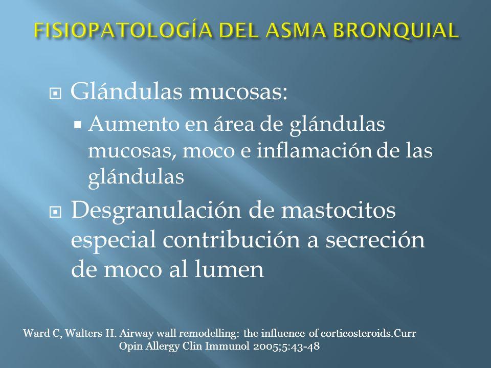 Glándulas mucosas: Aumento en área de glándulas mucosas, moco e inflamación de las glándulas Desgranulación de mastocitos especial contribución a secr