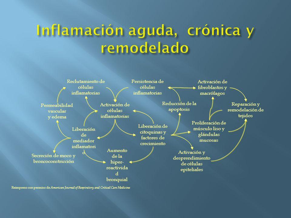 Reclutamiento de células inflamatorias Persistencia de células inflamatorias Permeabilidad vascular y edema Activación de células inflamatorias Libera